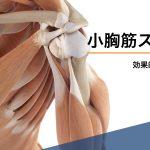 【動画】小胸筋を効果的にストレッチする方法