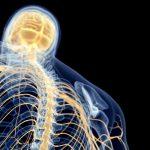 神経支配を考えながら施術展開してますか?