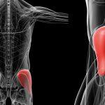 仙腸関節痛は中臀筋を鍛えれば治る⁉︎