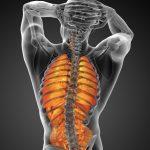 背中の痛みは内臓が原因かも