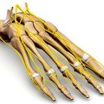足趾痛の原因は腰部関連痛